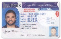 Illinois Driver's License for Illegal Aliens